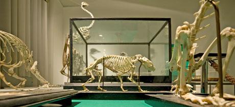 museo_evolucion_humana_burgos