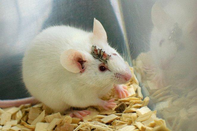 recuerdos-ratones